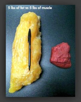 Fat v Muscle